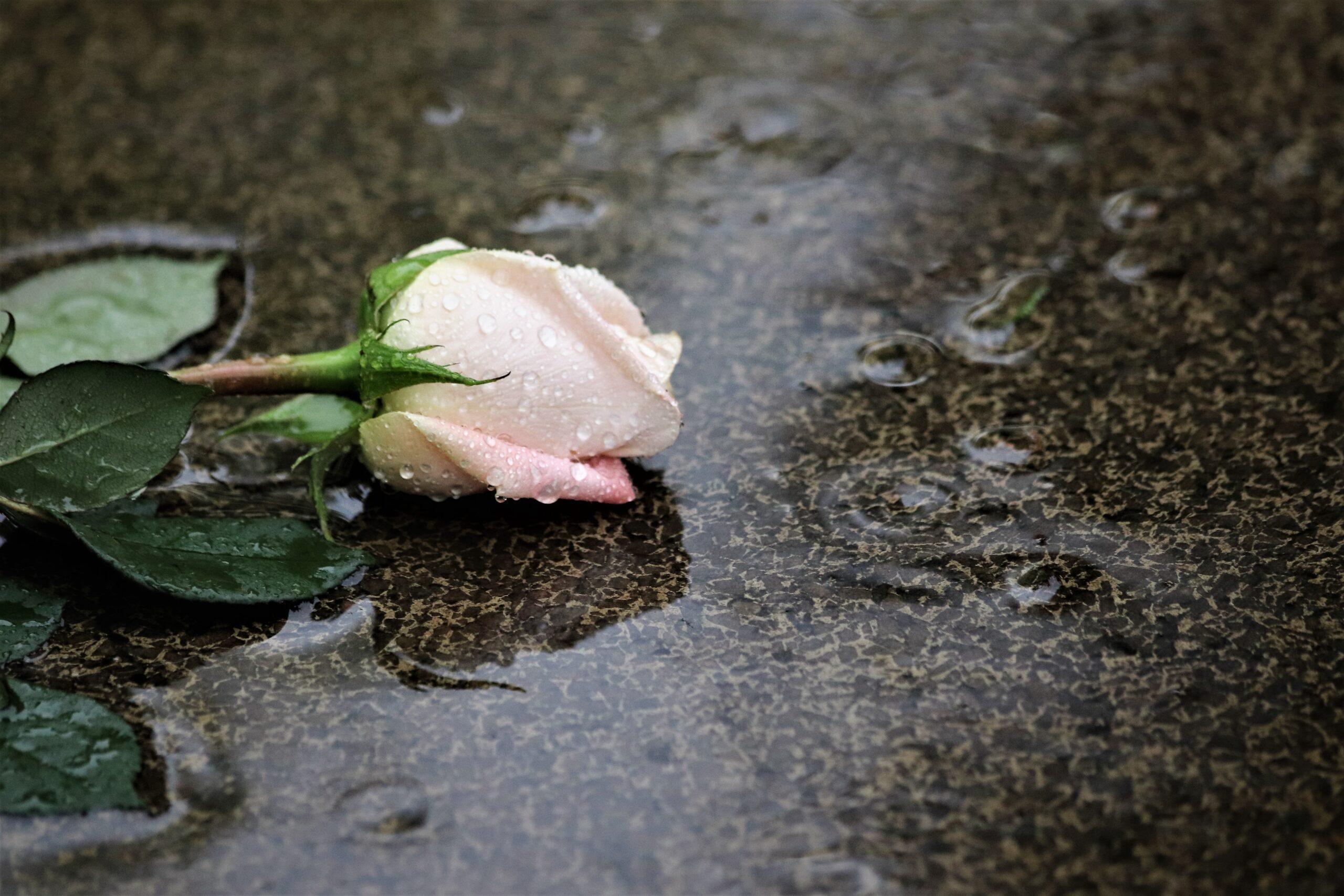 Condoleances. Foto: Pixabay